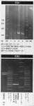 冤罪File 2008.9月号